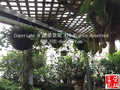 虹祺花苑露台